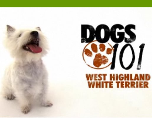 Do You Remember the Latest Pups From Dogs 101?