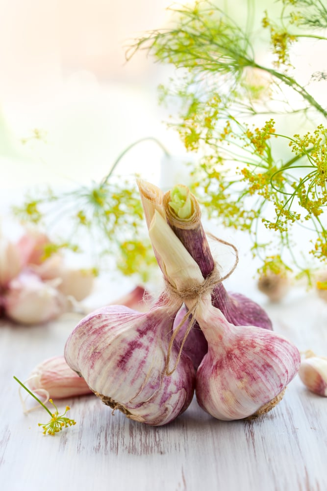 Embrace the Garlic