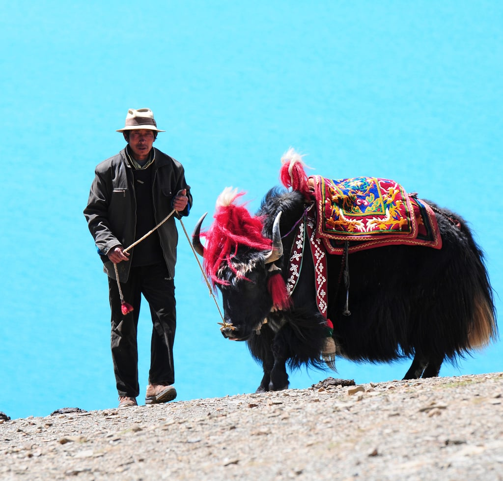 Ride Through Tibet on a Yak