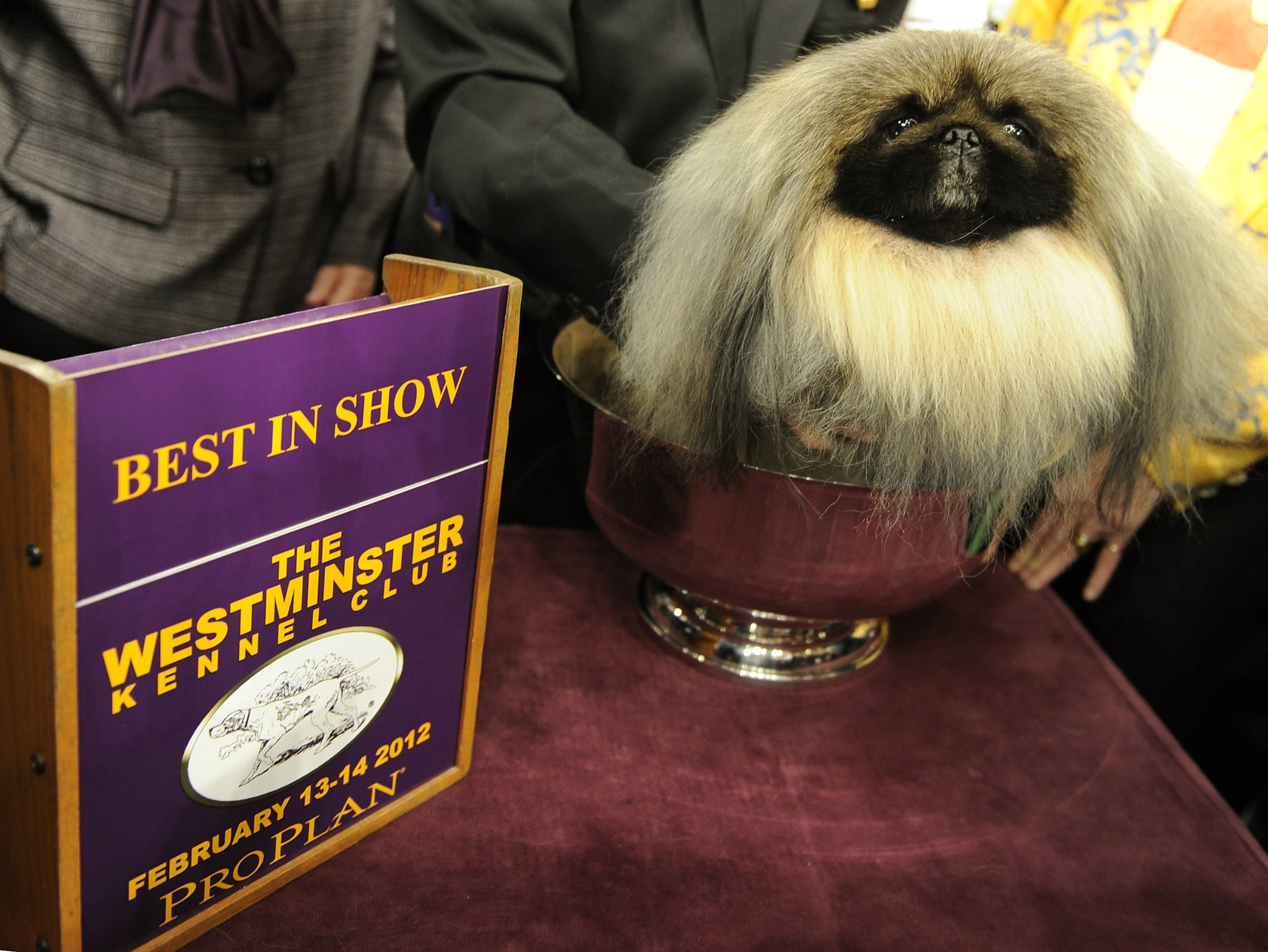 And the winner is . . . Malachy! The adorable Pekingese with the lustrous locks stole our hearts and the grand prize.