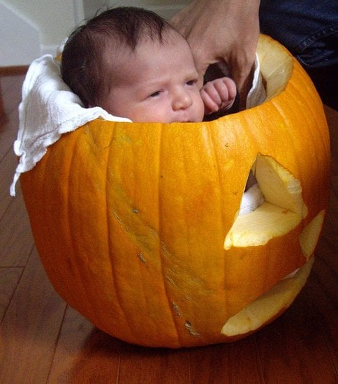 Sugarbabies: Small Enough For a Pumpkin