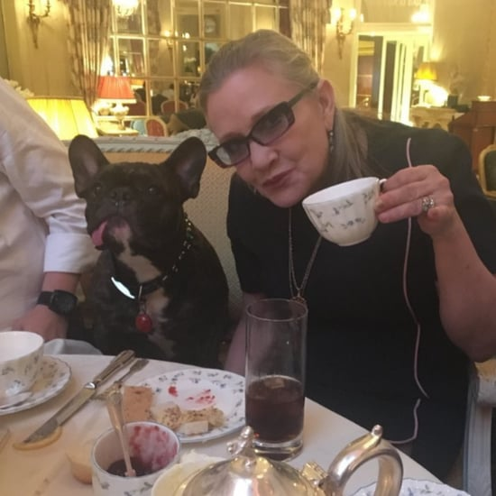 Carrie Fisher's Dog, Gary, Instagrams