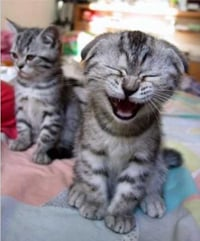 Are Yawns Contagious?