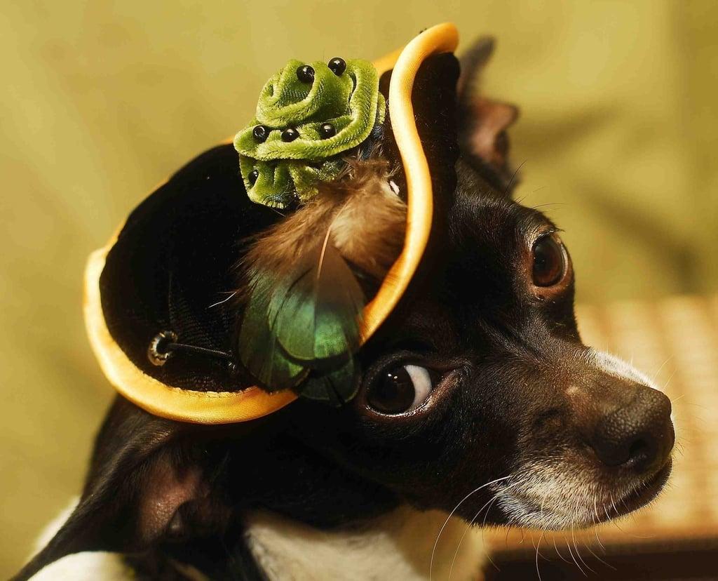 Elegant Pup