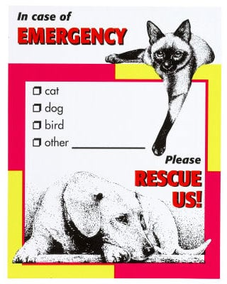 On the Ball: Pet's Emergency Kit