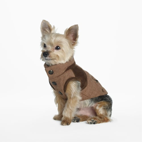 Ralph Lauren Tweed Dog Vest ($95)