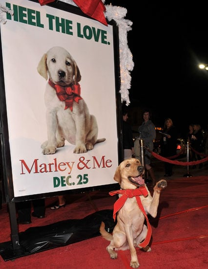 Will You Go See Marley & Me in Theatres?