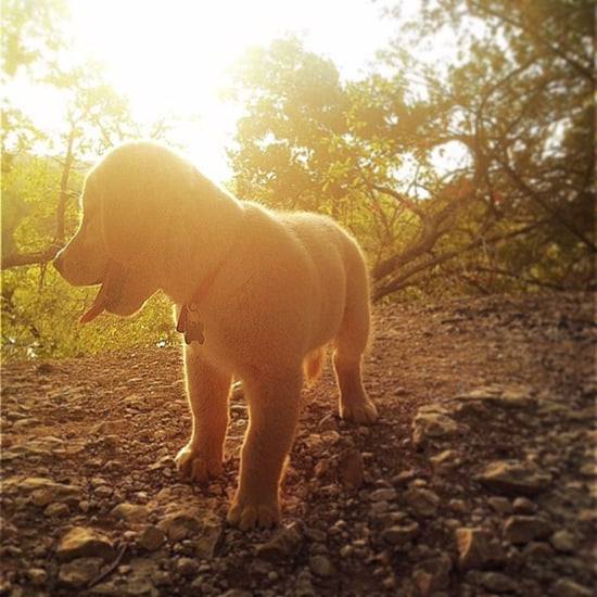 Pet of the Week: Glowing Golden Retriever