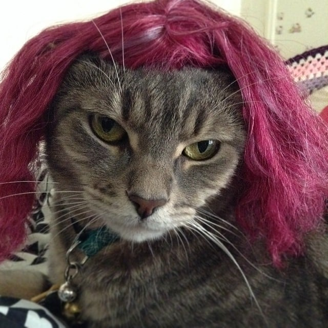 Wigs On Cats 69