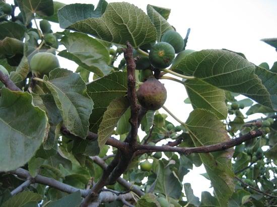 Name This Fruit
