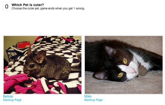 Can You Pick Which Pet Is Cuter?