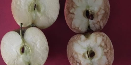 Teacher Uses Bruised Apple To Show Devastating Effects Of Bullying