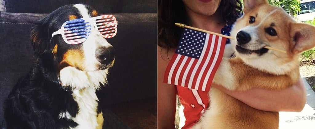 20 Pups That Are Proud to Be American