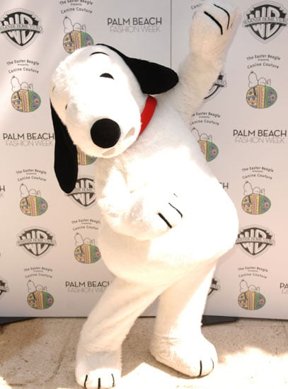 In the Spotlight: Easter Beagle Presents Canine Couture