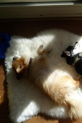 Pet Pic of the Day: Sun Soakers