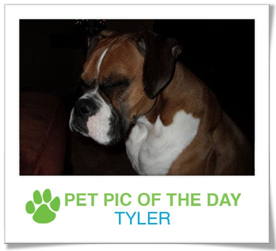 Pet pics on PetSugar 2009-02-13 09:30:27