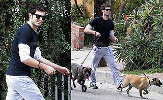 Adam Brody Doubles Up on Doggies