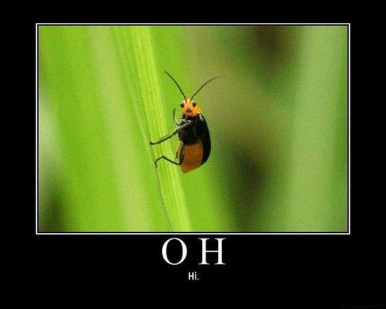 Cute Bug Says Hi