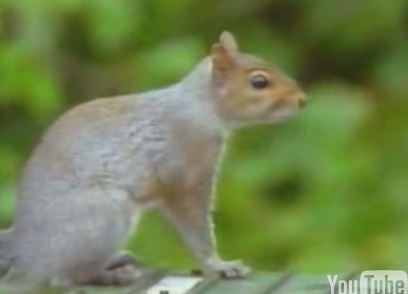 Cute Alert: Squirrel Obstacle Course