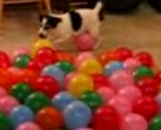 Dog Pops Balloons, Round 2