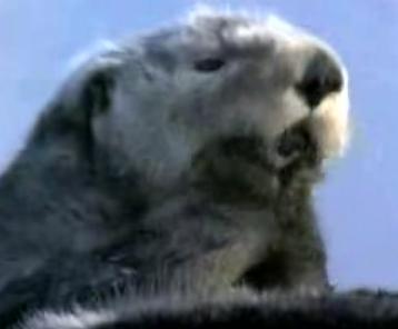 Hector, the Sea Otter, for Prez