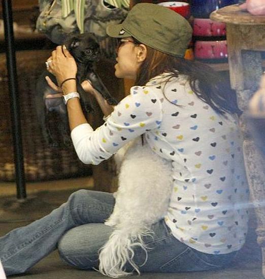 New Puppy Alert! Eva Longoria Parker