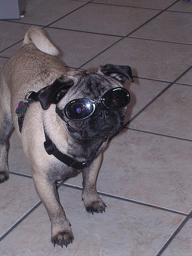 Product Review---Doggles