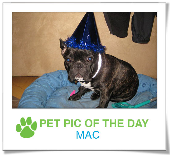 Pet Pics on PetSugar 2008-11-14 09:30:20