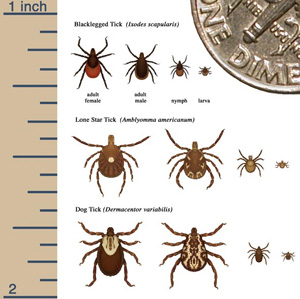Tips on Dealing with Ticks and Hiking