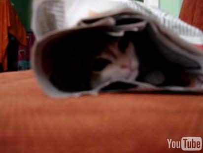 Emo Kitten Listens to Radiohead