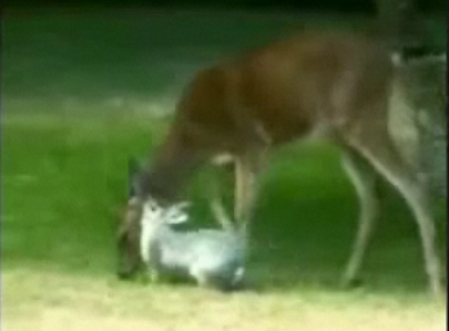 Bambi + Thumper + Cheesy Music = Awesome