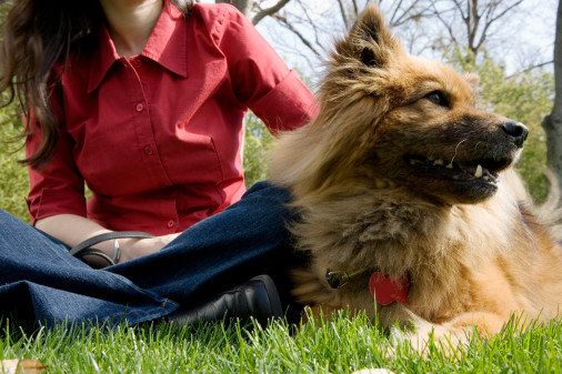 """Rent a Dog"" Service Hits US"