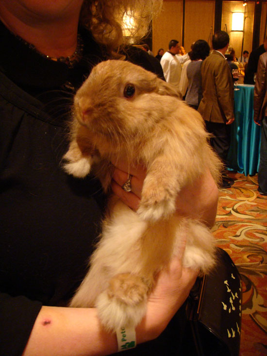 Rabbit kind