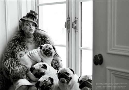 Pugs Play in The Pages of Vogue Italia