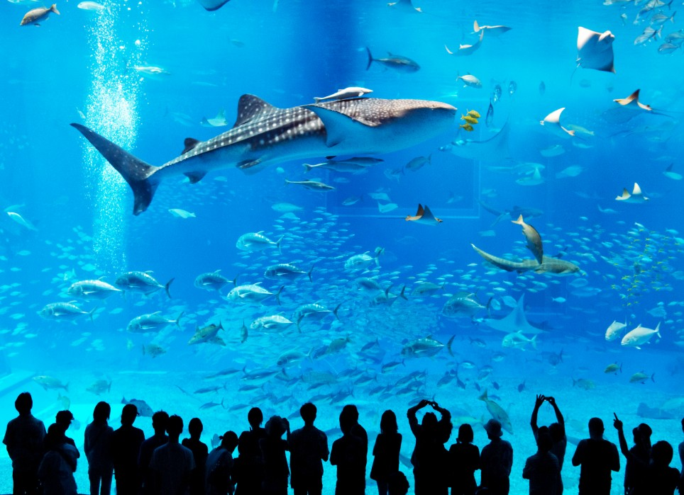 Worlds largest fish tank popsugar pets for Biggest fish in the world