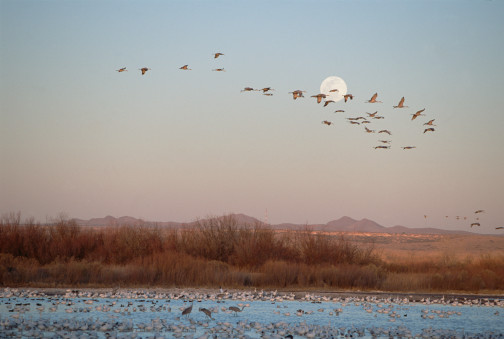 Full Moons Make Animals More Active