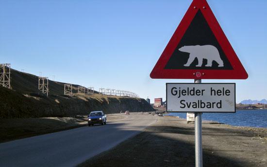 Arctic Ice Melt Threatens Polar Bear Population