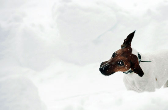 """I Need Your Help . . . My Dog Won't """"Go"""" in the Snow!"""