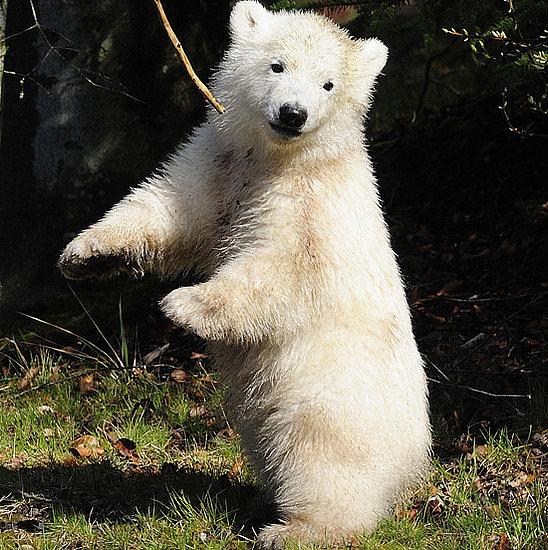 Flocke's Public Debut of Dancing Skills