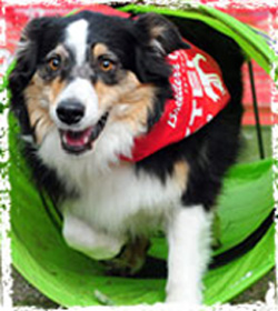 Canines Competed In (and Completed) Obstacle Courses?