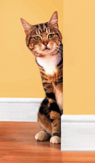 Pet Peeves: Dog + You + Boyfriend + Cat = . . .