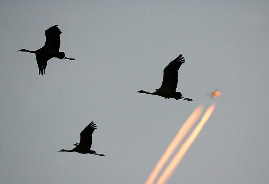 Airplane Fallout: Effort to Pass Bird-Killing Legislation