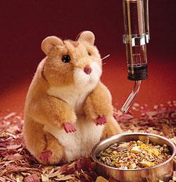 Should Children Under 5 Have Hamsters as Pets?