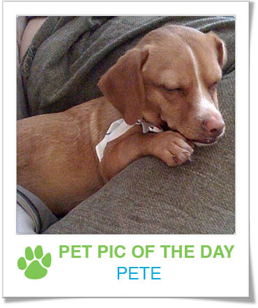Pet Pics on PetSugar 2009-02-23 07:15:16