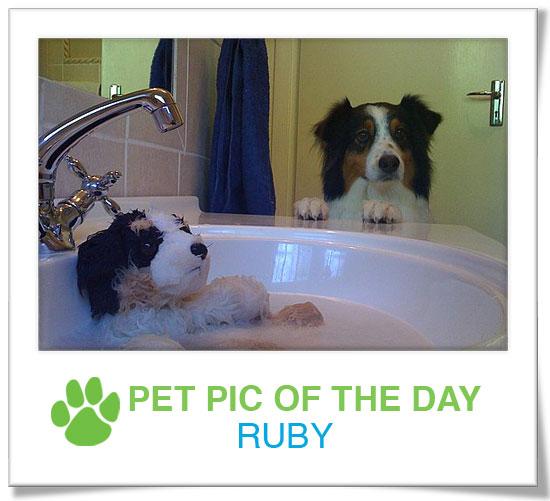 Pet Pics on PetSugar 2009-04-28 09:00:11