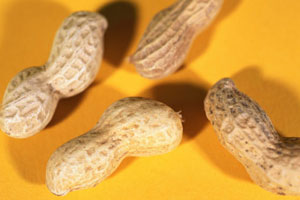 Possible Cure For Peanut Allergy Found