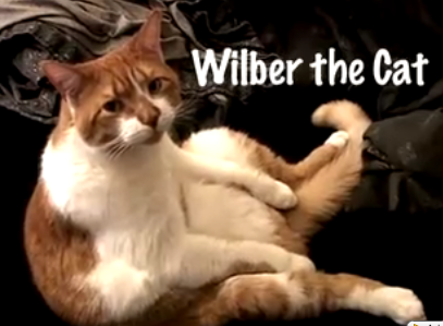 Wilber the Cat Shows You His Crib, His Life