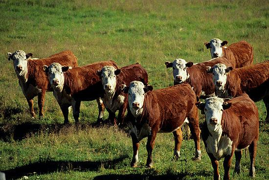 Poll: Should Meat Be Seasonal?