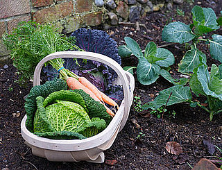 Yummy Links: From Edible Gardens to Cakes