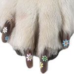 Pet Nail Appliqués: Spoiled Sweet or Spoiled Rotten?